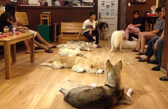 Khách đến quán cà phê thỏa thích ngắm nhìn những chú chó này