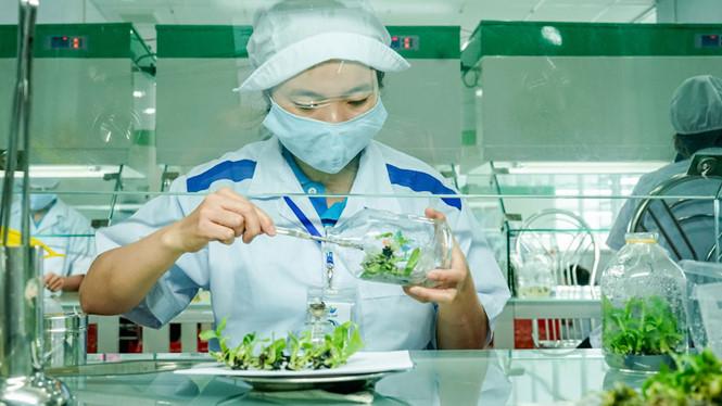 Các lao động trẻ tay nghề cao có nhiều cơ hội việc làm trong lĩnh vực nông nghiệp công nghệ cao /// Ảnh: Minh Hiếu